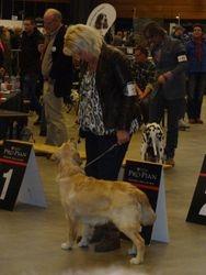 Spirit show groningen puppyklasse 3 e geplaatst