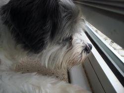 LUKA MY LITTLE GUARD DOG