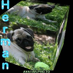 Snowpug`s Herman the Mascot