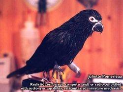 """LORI parrot""--- audio animatronic"