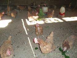Poultry Unit