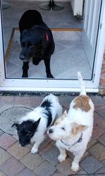 Ted, Alfie and Rodney