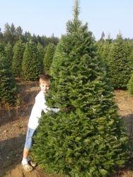 Tree Hugger by Chris Aldrich