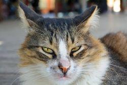 Kitty Face 2