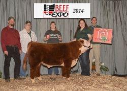 Casey - Division Champion and Grand Champion Bull - Ohio Beef Expo 03/14