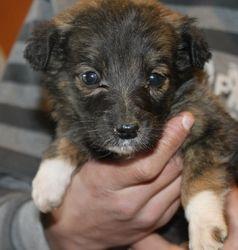 Ursulina passed away 21 Feb 2013 RIP little girl