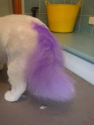 one colourful tail