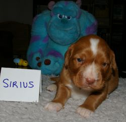 Sirius---ly cute at 17 days