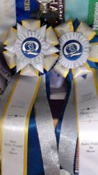 Baby puppy rosettes 2016 Championships