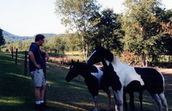 Dave and the yearlings