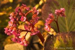 Swampflower / Sumpfpflanze