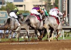 Grey Trifecta in the San Carlos