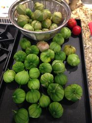 Tomatillo Bumper Crop! Hello Green Salsa!