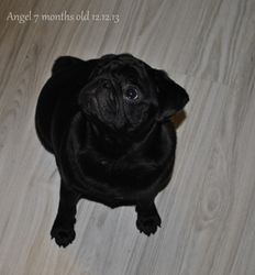 Snowpug`s One Angel to You