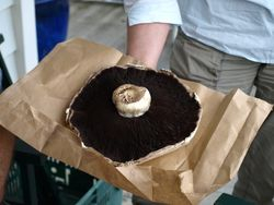 The Monster Mushroom