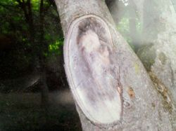 Jesus Image on a Tree Trunk