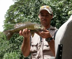 Toby Hawaii small mouth