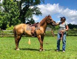 Sharp looking horse