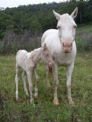 Emrillee and her foal