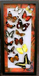10x20 black shadowbox frame with orange edge mat