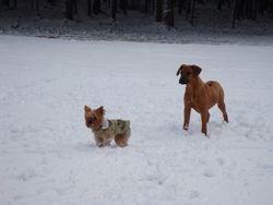 Cody and Bentley