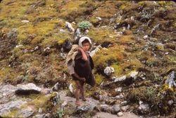 Goat herder's children in Barun Valley