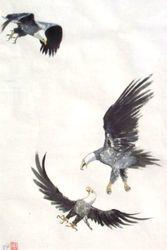 American Eagle Fight