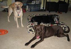 Annie, Sadie, Hershey