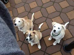 Sambuca, Sophie, Selena