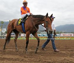 Beholder Post-Race
