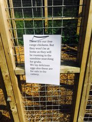 More animals on our smallholding
