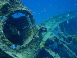 Snorkelling over the wreck in Deep Bay