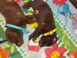 Teal and Yellow Girls