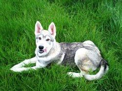 Pup 4 months