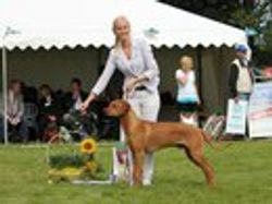 D'arby BEST IN SHOW