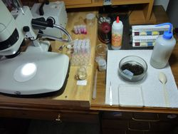 Laboratory set up for sorting