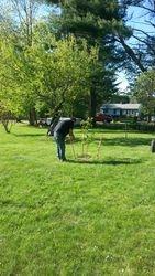 Transplanting new fruit trees