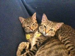 Still Cuddling!!!