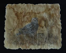 "Snowy owl (10 by 12"" mixed media on paper) In Private Collection"