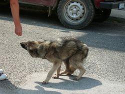 Wolfy.