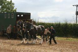 Pair of heavy horses