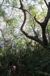 Lucía Jorge Sales: A field primatologist at work (Uluwatu, Bali, May 2016)