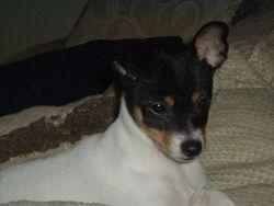One our puppy boys - Buddy