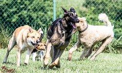 Renny, Shylo & Walley