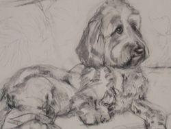 murphy's portrit