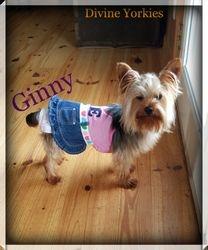 """""""Ginny"""""""