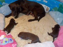 Re-introducing pups