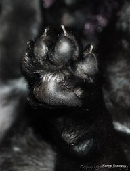 One of Esmeralda`s beautiful paw s