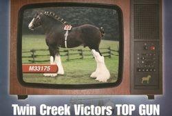Clydesdale Stallion Twin Creek Victor's Top Gun