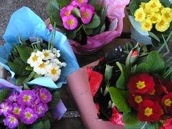 Spring Bowls